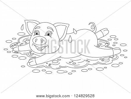 Vector illustration of cute pig in a puddle, funny piggy standing on water puddle, coloring book page for children