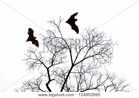 Bat silhouettes with barren tree isolate on white background