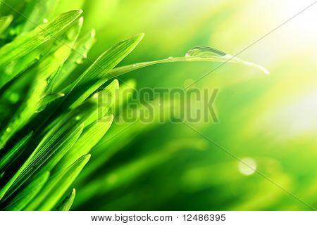 water drop shine