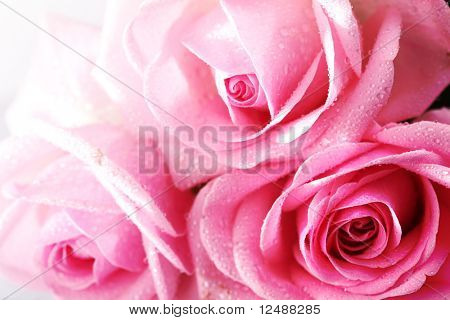 roze roos macro close-up
