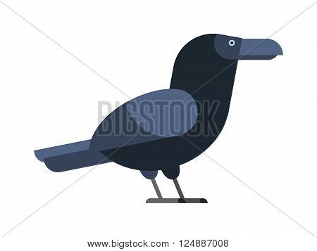 Black raven and wild nature raven. Raven flat cartoon wildlife bird and raven flight ornithology blackbird. Carrion crow raven with wide-spread wings black beak nature feather wild dark bird vector.