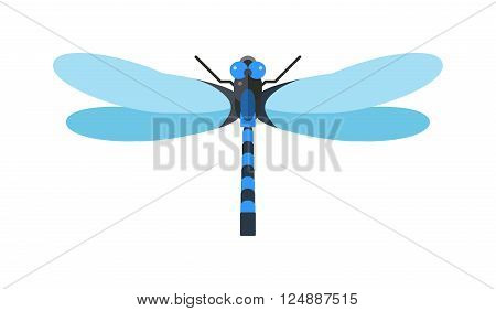 Cartoon dragonfly and flat blue dragonfly. Summer dragonfly beautiful fragility damselfly. Dragonfly anax imperator male blue emperor with big eyes nature insect animal wildlife vector illustration.