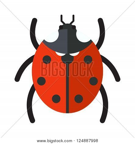 Ladybug vector insect isolated on white background. Flat red ladybug summer fly beetle. Spring ladybug insect. Ladybug cute cartoon insect vector. Insect beautiful design.