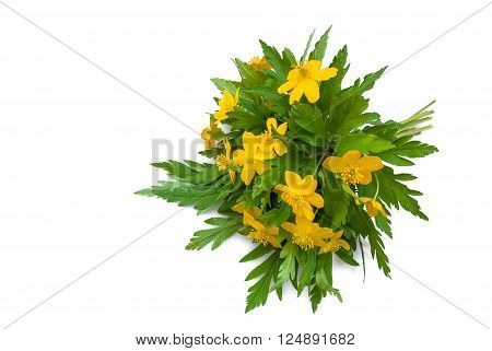 yellow buttercups bouquet isolated in white bacground
