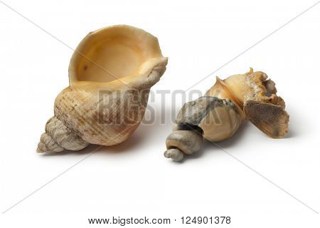 Fresh cooked common whelk on white background