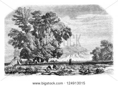 The plane tree of Godfrey cap to Bujugdere, vintage engraved illustration. Magasin Pittoresque 1857.