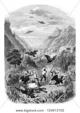 Condor hunt, vintage engraved illustration. Magasin Pittoresque 1857.