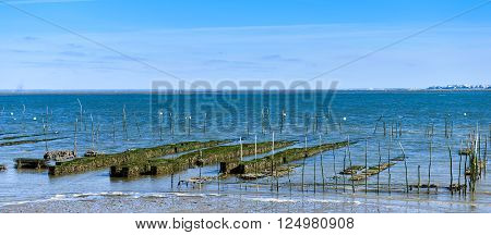 Growing oysters at low tide at the port of Arcachon, France poster