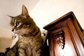 cat at interior poster