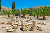 Pillars and columns at palm grove area in Gortyna. Crete Greece poster