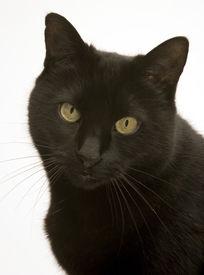eine schwarze Katze