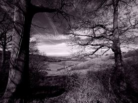 Countryside view with trees in black and white with a retro purple tint