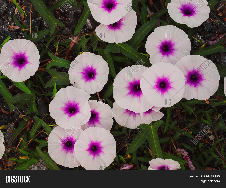 Close Flower White Image Photo Free Trial Bigstock