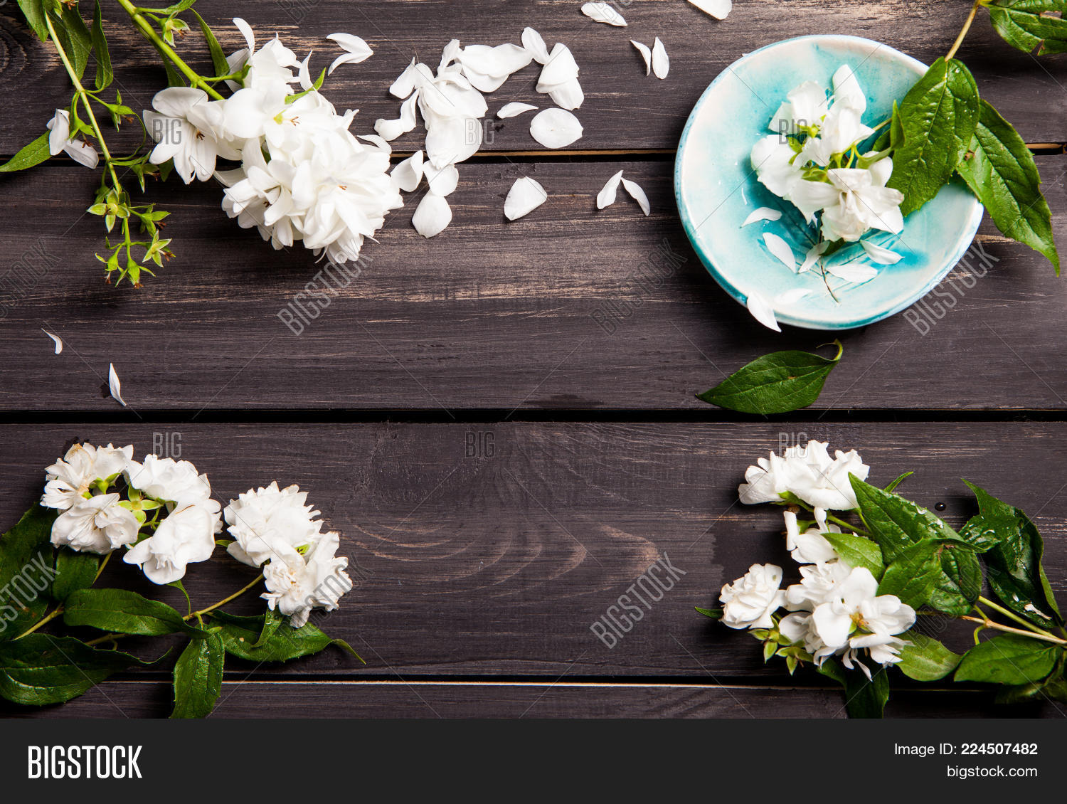 White Flowers Jasmine Image Photo Free Trial Bigstock
