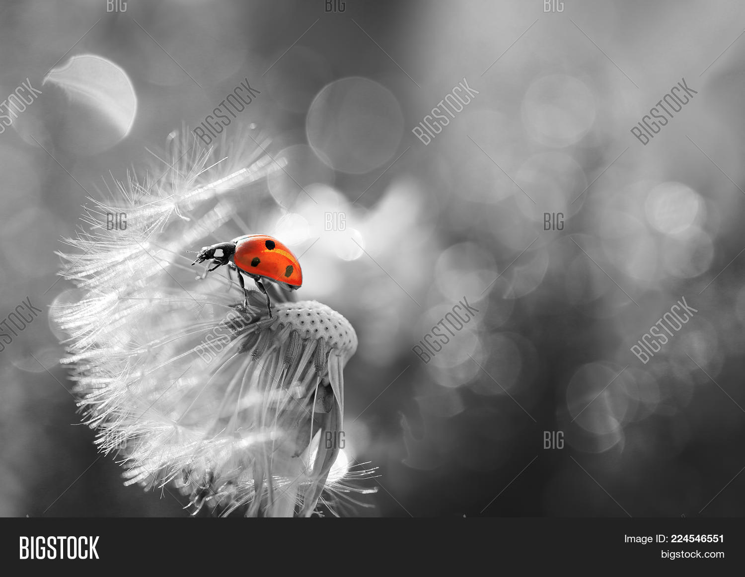 Small red ladybug PowerPoint Template - Small red ladybug PowerPoint ...