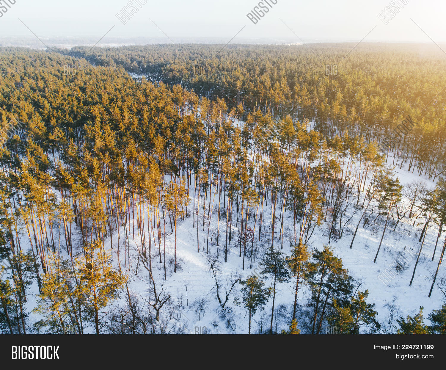 coniferous forest in winter powerpoint template coniferous forest