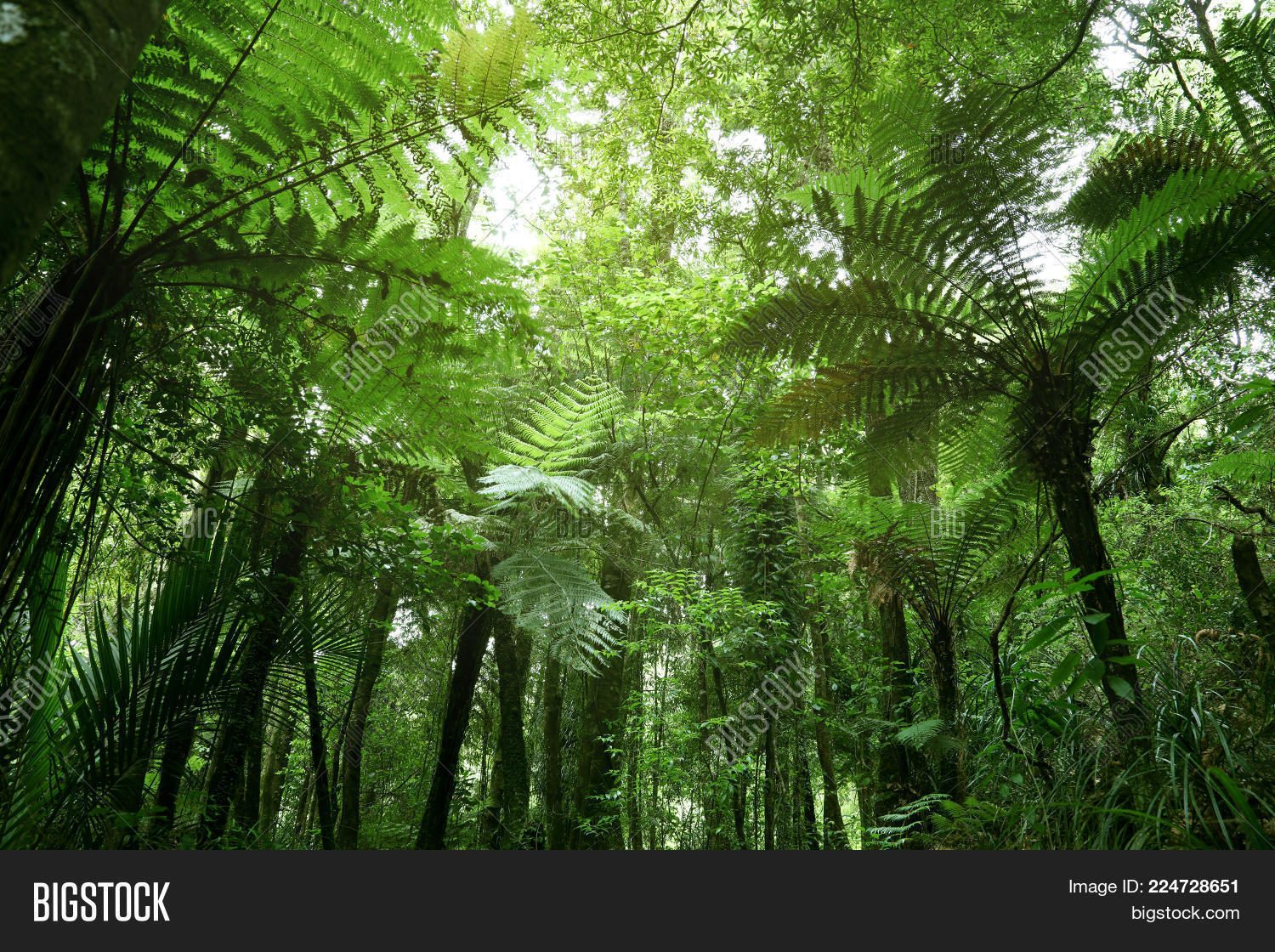 tropical jungle green tree ferns powerpoint template tropical