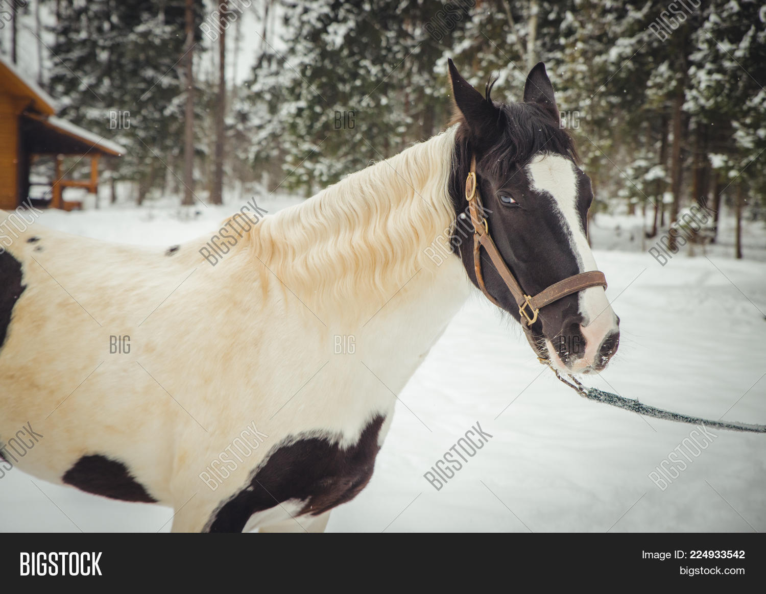 Countryside Cute Brown Horse Powerpoint Template Countryside Cute