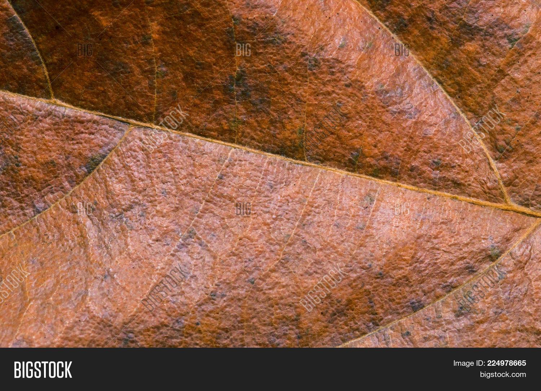 Golden Leaf Closeup Image Photo Free Trial Bigstock