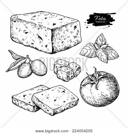 Greek feta cheese block, slice drawing. Vector hand drawn food sketch with olive, basil, tomato. Greek salad ingredient. Farm market product for label, poster, icon.