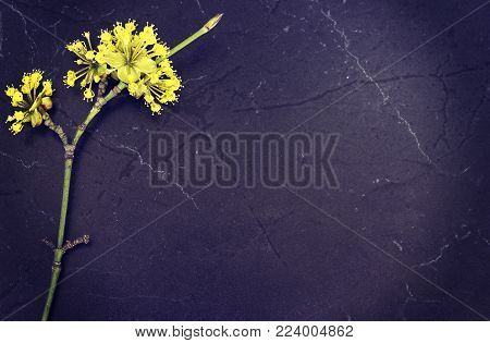 Flowers  Cornus mas, Cornelian cherry, European cornel or dogwood