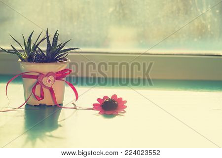 Valentine's Day, the day begins with a good mood - cactus with a heart symbol stands on a green surface in rays of sun, next to a red flower on the window blurred background.