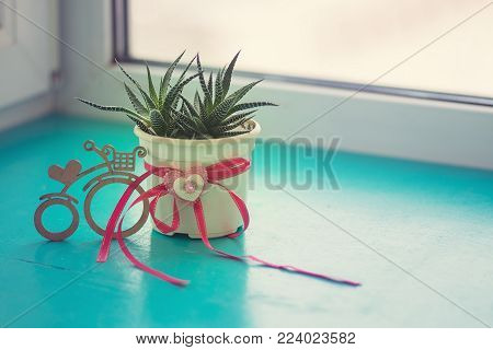 Valentine's Day, the day starts with a good mood - cactus with a heart symbol stands on a green surface next to a bicycle symbol with a heart in the light of sun, on the window blurred background.