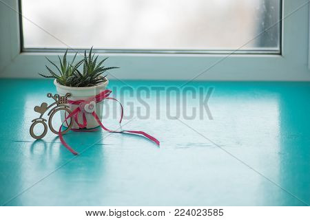 Valentine's Day - cactus with a heart symbol stands on a green surface next to a bicycle symbol with a heart on the window blurred background.