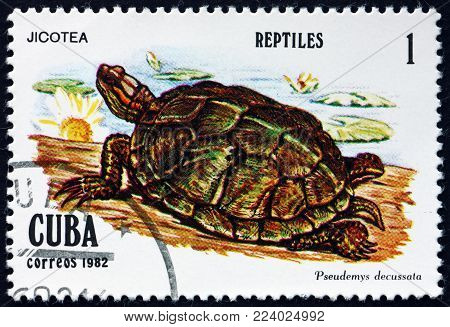 CUBA - CIRCA 1982: a stamp printed in Cuba shows Cuban slider, pseudemys decussata, is a species of turtle, circa 1982