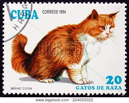 CUBA - CIRCA 1994: a stamp printed in Cuba shows Maine coon, domesticated breed of cat, circa 1994
