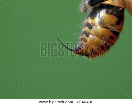Waspsting