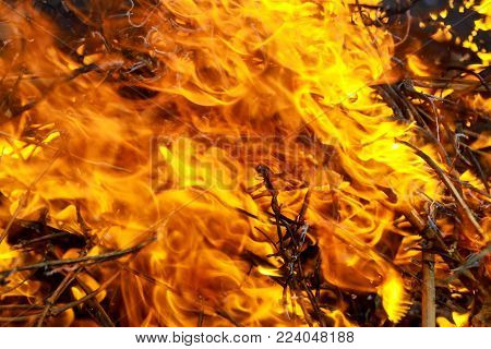 Close-up burn waste fire flame and smoke fire burns grass and branches