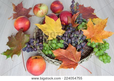 Maple leafs, nectarine, apples, grapes isolated on a wooden background. Autumn still life.
