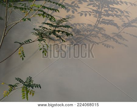 Surreal backdrop created by plant shadows cast against a building. The late afternoon sun casts long shadows from the plants against the concrete outside of a high rise building in Tokyo, Japan.