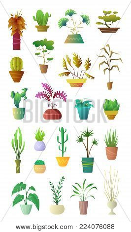Cartoon style collection Plants in Pot. Floral Decoration Interior for Home, Hotel or Office. Vector illustration of stylized office Plants.