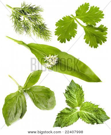 collection of  fresh herbs isolated on white background