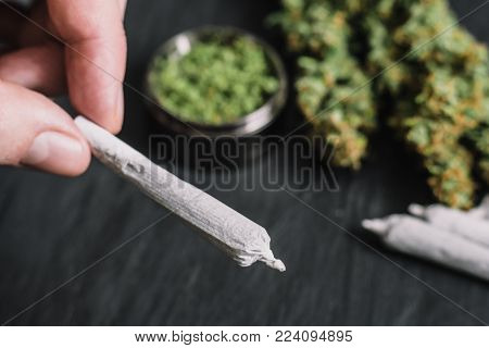 Twisted cant with marijuana in the hands of a man against the background of fresh cones of cannabis flowers