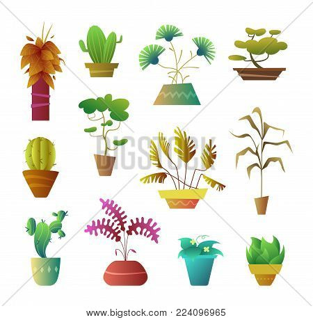 Cartoon style Plants in Pot. Floral Decoration Interior for Home, Hotel or Office. Vector illustration of stylized office Plants.