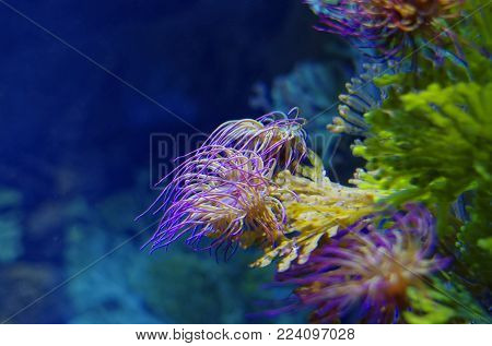 Coral in the sea with beauftiful colors