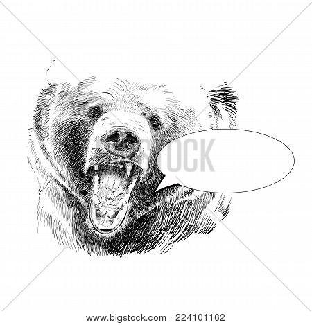 Roaring bear. Bear head. Wild bear. Brown bear head. Green life. Wild life