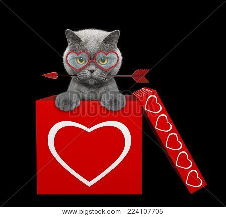 Cat with arrow sitting in valentines box. Isolated on black background