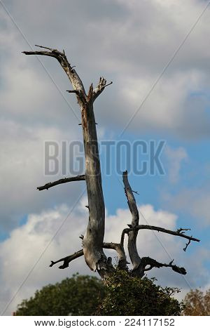 Storm Struck Branch on a Cloudy Sky