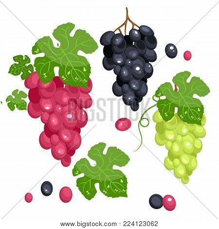 Photo realistic grape set. Full editable, isolated on white. Green grape, red grape, black grape. Stock vector.