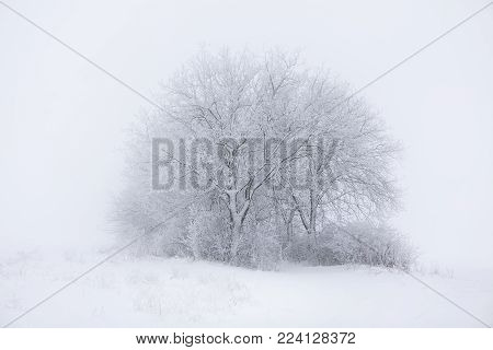snowy winter landscape with tree in haze