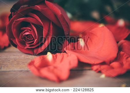Red Rose Flower On Wooden Floor In Valentine's Day