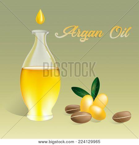 Vector illustration Argan oil in a bottle with argan fruits and argan nuts. Text Argan oil.