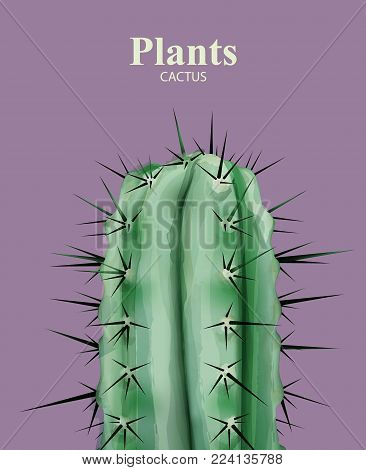 Cactus plant close up Vector detailed illustrations