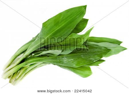 Ramson bunch isolated on the white background