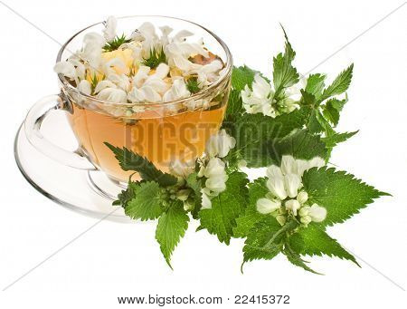 Herbal tea with flowers nettle on white background