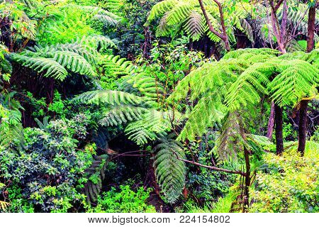 Scenic view of beautiful tropical rainforest with giant tree ferns in Horton Plains National park, Sri Lanka. Typical evergreen montane cloud forest. Jurassic landscape